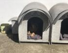 Comitiva osoriense conhece projeto de Casinhas para cães em SC