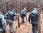 Operação conjunta combate abigeato em Mostardas