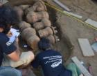Urnas funerárias indígenas de 500 anos são encontradas intactas
