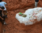 Dinossauro de pescoço longo mais antigo do mundo é descoberto no RS
