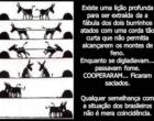 A fábula dos dois burrinhos - Jayme José de Oliveira