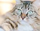 """Campanha orienta população sobre a """"doença do gato"""""""
