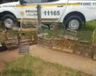 BM prende homem por manter pássaros silvestres em cativeiro em Torres