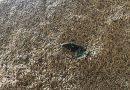 MP investiga esquema que vendia arroz com insetos, larvas e fezes de rato