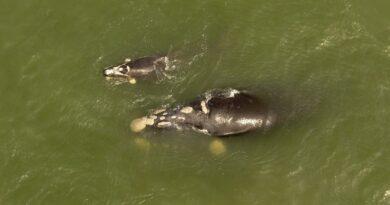 Litoral presente no estudo: pesquisa inédita sobre migração da baleia-franca-austral