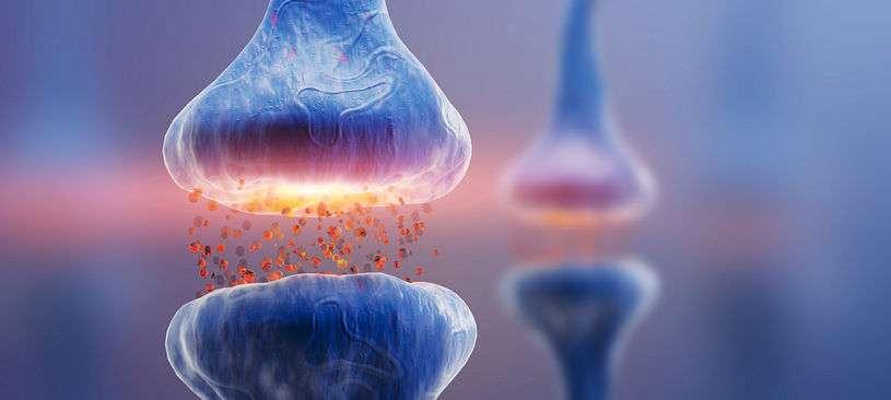 Dopamina: conheça o neurotransmissor da motivação