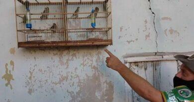 Patram recolhe 11 pássaros em cativeiro em Osório